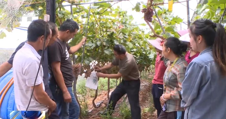现代农业助农增收 四川扶贫产业获得加速发展