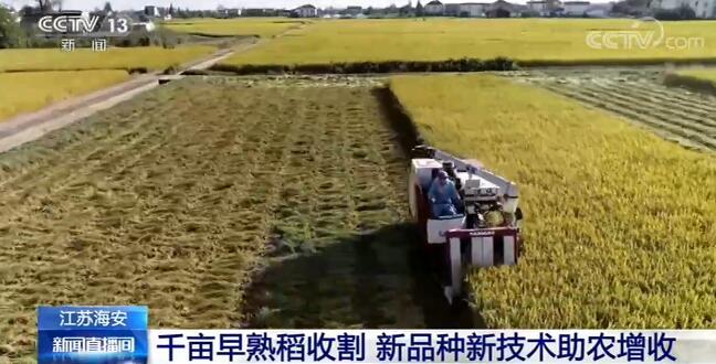 新品种新技术助农增收 江苏早熟稻丰收