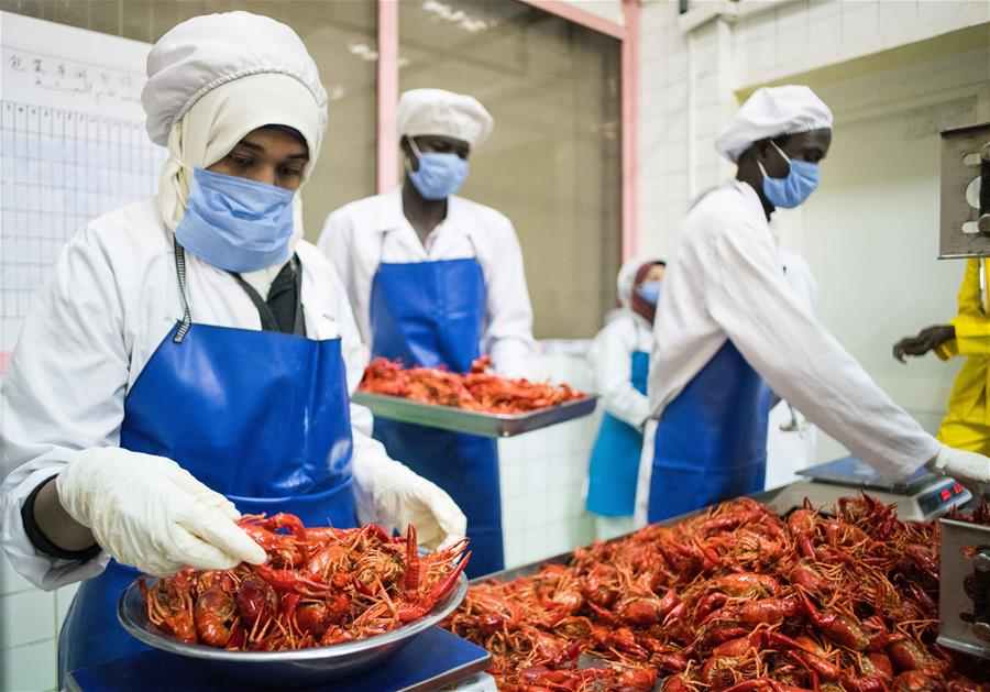 Staff members weigh crayfish at a Chinese factory in the 10th block of Ramadan city of Sharqiya province north of Cairo, Egypt, on May 8, 2019.