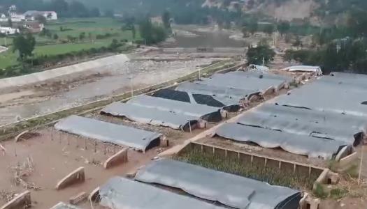 经济损失12.2亿元 河南农作物受灾面积215.2千公顷