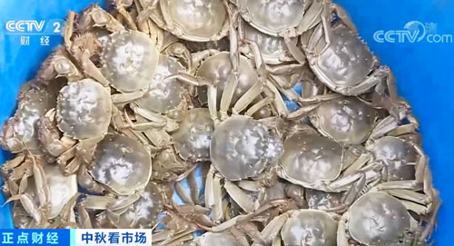 江苏镇江:无蟹不成秋 螃蟹开捕上市