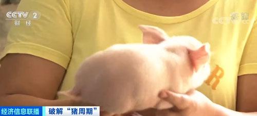 四川:卖一头猪亏七八百元 养殖户亏损面扩大