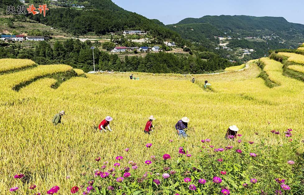 【央视快评】让广大农民生活芝麻开花节节高